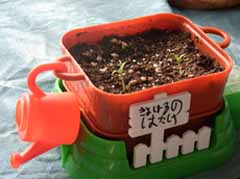 4-26kiyo-tomato.jpg