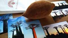 baobabu2.jpg
